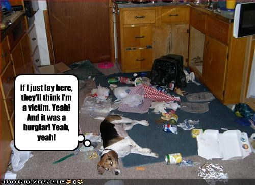 bad dog,beagle,destruction,FAIL,garbage,kitchen,trash