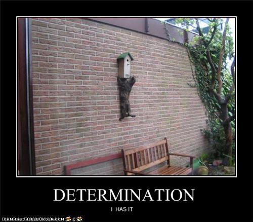 DETERMINATION I HAS IT