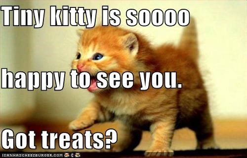 Tiny kitty is soooo happy to see you. Got treats?
