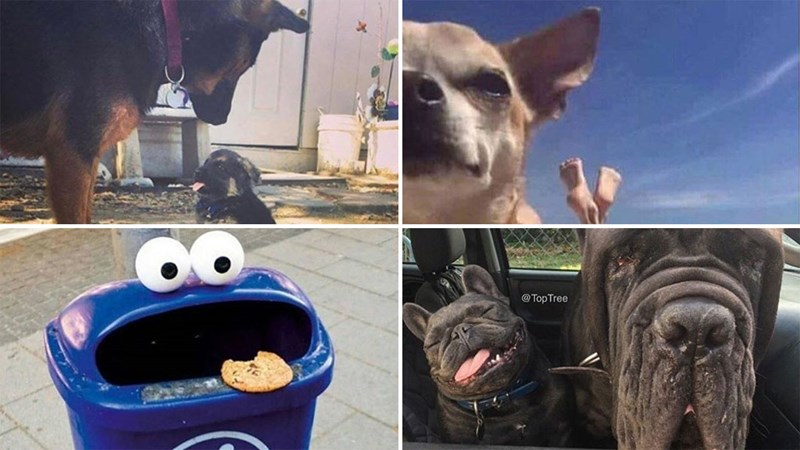Assortment of memes from Instagram, mostly about dogs.