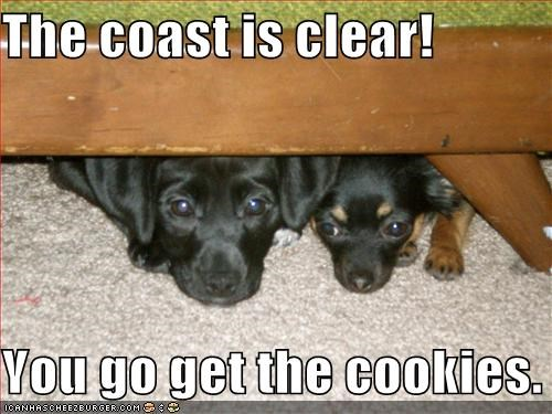 The coast is clear! You go get the cookies  - Cheezburger