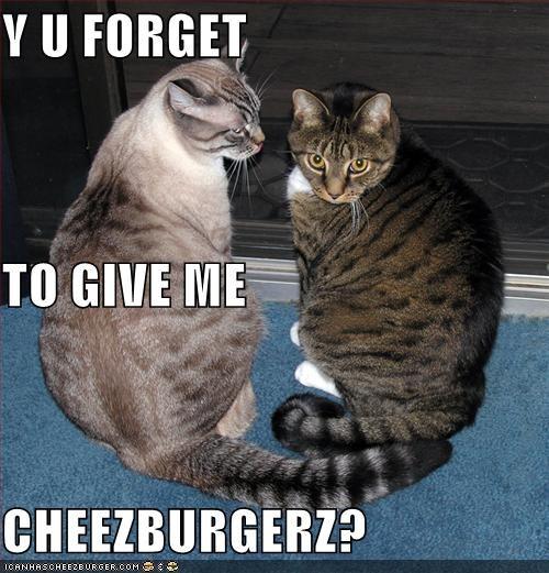 Cheezburger Image 2019512576