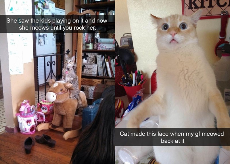 Funny Cat Snaps That Will Make You Want to Put Your Pet on Snapchat