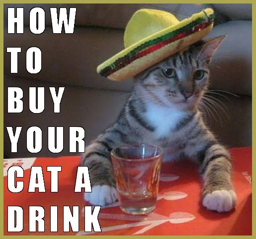 Cover photo of cat wearing a sombrero and a shot glass - caption HOW TO BUY YOUR CAT A DRINK