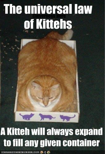 Cleverness Here The universal law of Kittehs A Kitteh will always expand to fill any given container