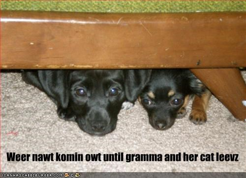 chihuahua,grandma,hide,hiding,leaves,lolcats,whatbreed