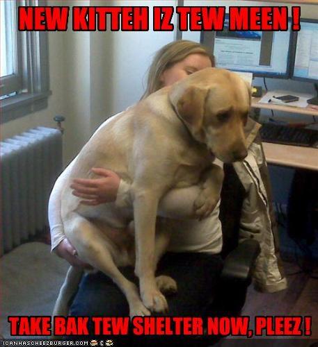 NEW KITTEH IZ TEW MEEN ! TAKE BAK TEW SHELTER NOW, PLEEZ !