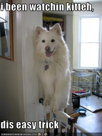 gate kitteh lolcats perch roost samoyed trick - 2022650624