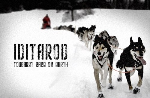 dogs alaska list dog sled huskies iditarod - 20229