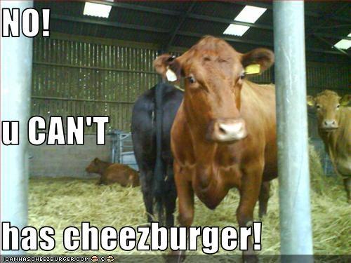 Cheezburger Image 2029288192