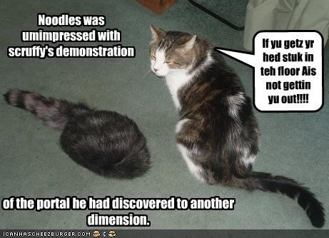 Noodles was umimpressed with scruffy's demonstration of the portal he had discovered to another dimension. If yu getz yr hed stuk in teh floor Ais not gettin yu out!!!!