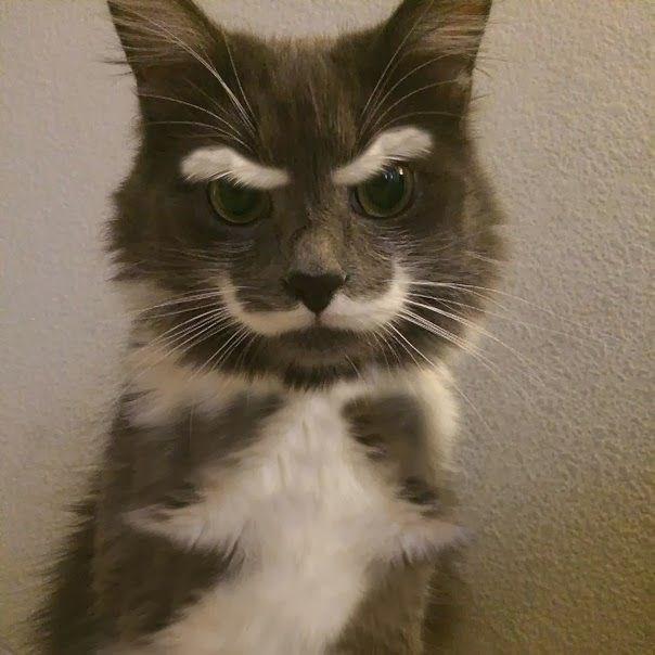 Cats,special,fur