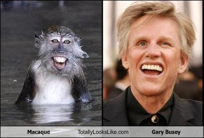 animals gary busey Hall of Fame macaque monkey