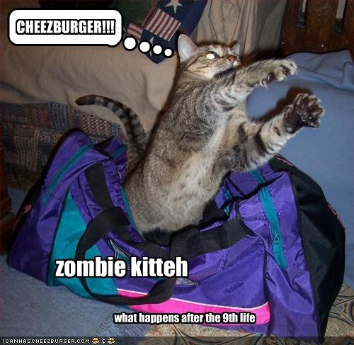 zombie kitteh what happens after the 9th life CHEEZBURGER!!!