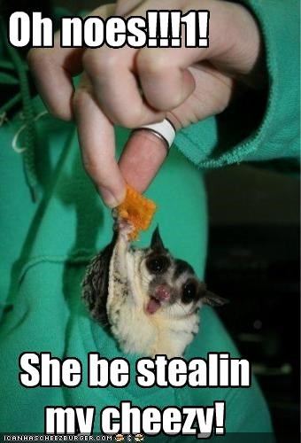 Oh noes!!!1! She be stealin my cheezy!