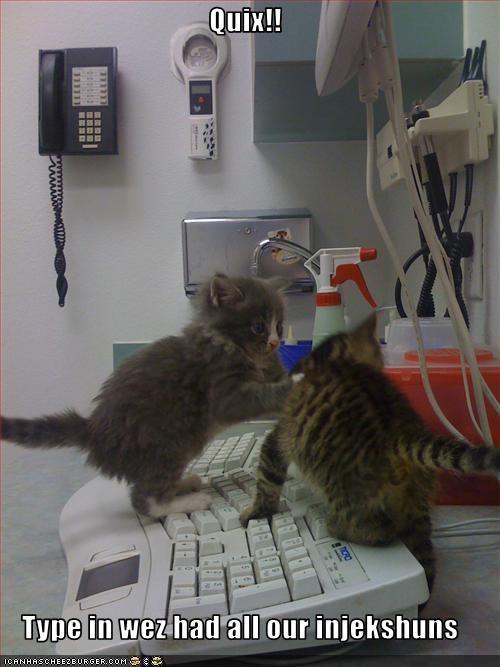 cute kitten plotting vet - 2031914240