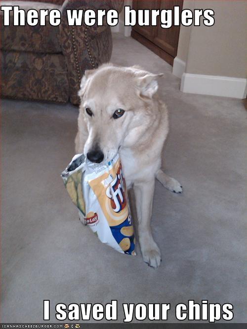 chips fud helping labrador nom nom nom - 2033555712