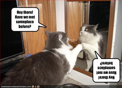 Cheezburger Image 2034167552