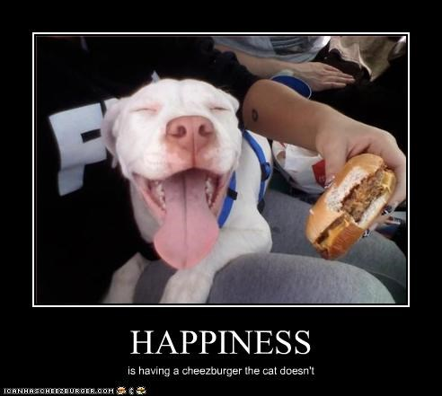 cheezburger fast food food happiness lolcats pitbull - 2035464448