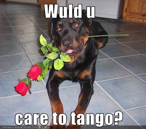 dancing,dating,flirting,flowers,rottweiler