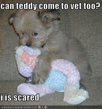 havanese scared stuffed animal toys vet - 2038406912