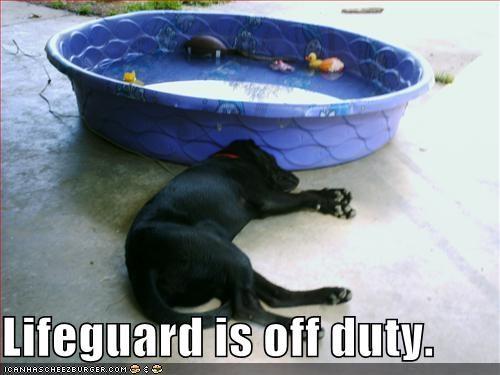 asleep labrador lifeguard pool sleeping swimming - 2038915840