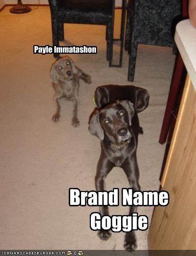 Payle Immatashon Brand Name Goggie