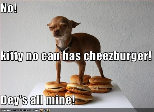 Cheezburger Image 2041149184