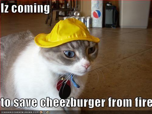 Cheezburger Image 2041620224