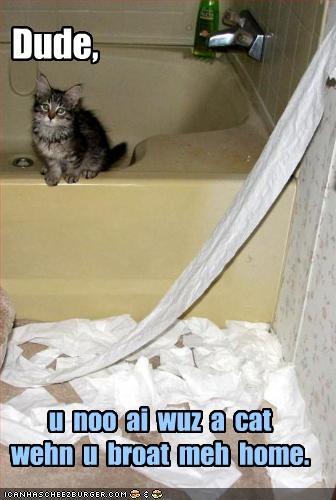 bad cat cute kitten mess mischief - 2045541632
