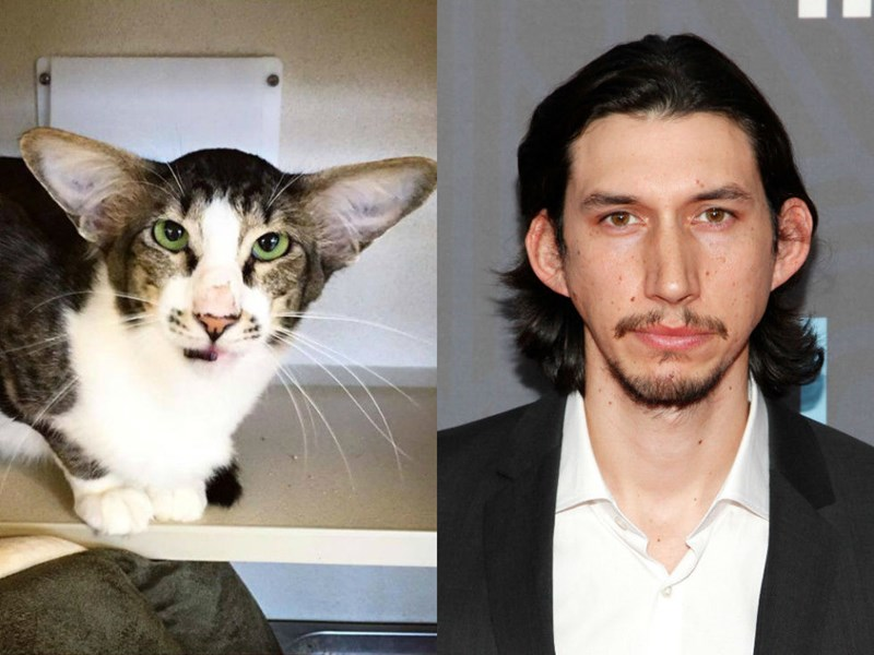 Animals Who Looks Exactly Like celebs