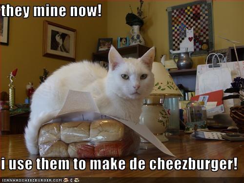 Cheezburger Image 2046625536