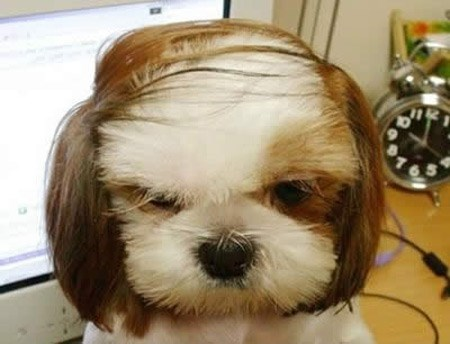 dogs haircut Cats funny - 2048005