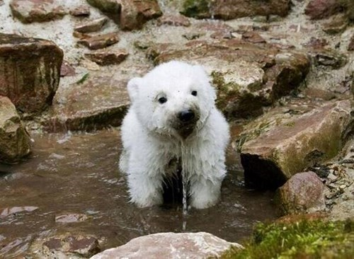 cute,cubs,funny,list,polar bears,international polar bear day
