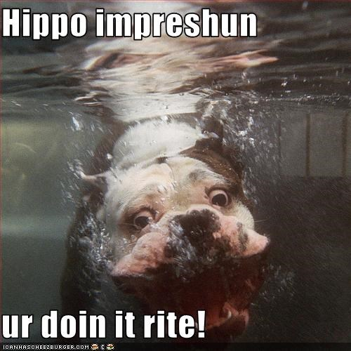 bulldog,doing it right,hippo,impression,underwater