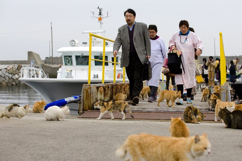 People coming to visit Aoshima Japan, the Cat Island