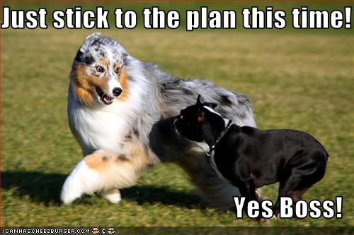 Just stick to the plan this time! Yes Boss! - Cheezburger - Funny ...
