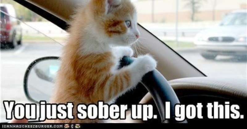 Funny memes of dogs and cats chasing things or riding in cars.