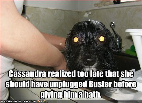 bath,electricity,eyes,laser,whatbreed