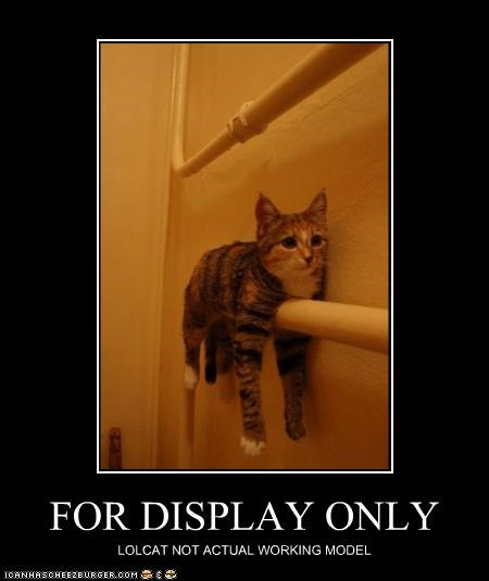 bathroom monorail cat - 2052975360