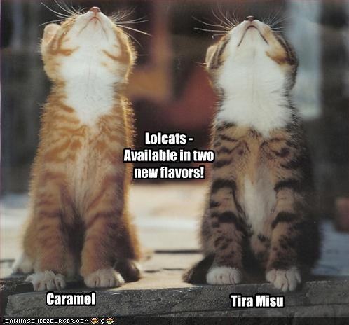 Lolcats - Available in two new flavors! Caramel Tira Misu