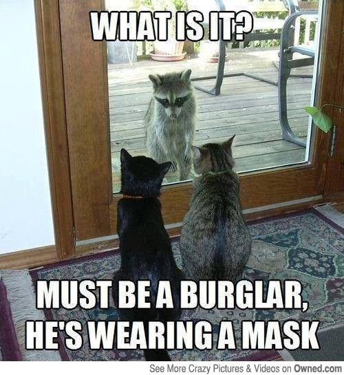 Memes raccoons funny - 2053125