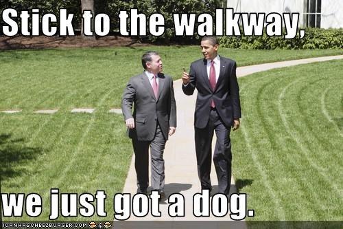 animals barack obama democrats dogs president White house - 2054407424