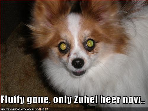 Cheezburger Image 2056575232