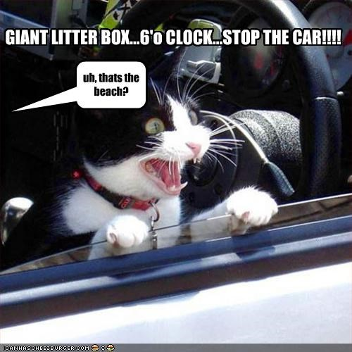 GIANT LITTER BOX...6'o CLOCK...STOP THE CAR!!!! uh, thats the beach?