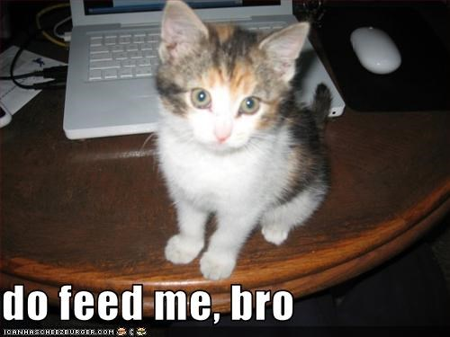 do feed me, bro