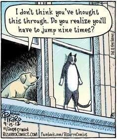 Death Memes 9 lives Cats funny - 2059269