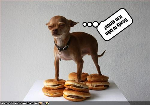 Cheezburger Image 2059949824