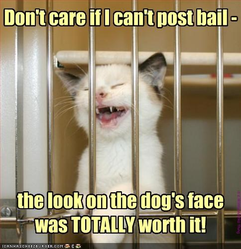 Don't care if I can't post bail - the look on the dog's face was TOTALLY worth it! is a WinnieWonka thing