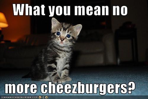 Cheezburger Image 2065164544